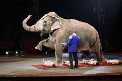 Elephants in the Circus