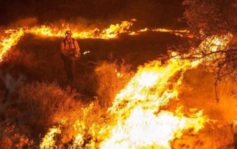 South India forest fire leaves 9 dead