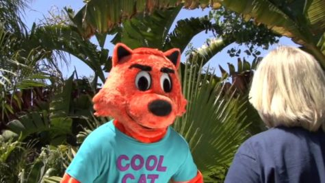 Cool Cat is the coolest
