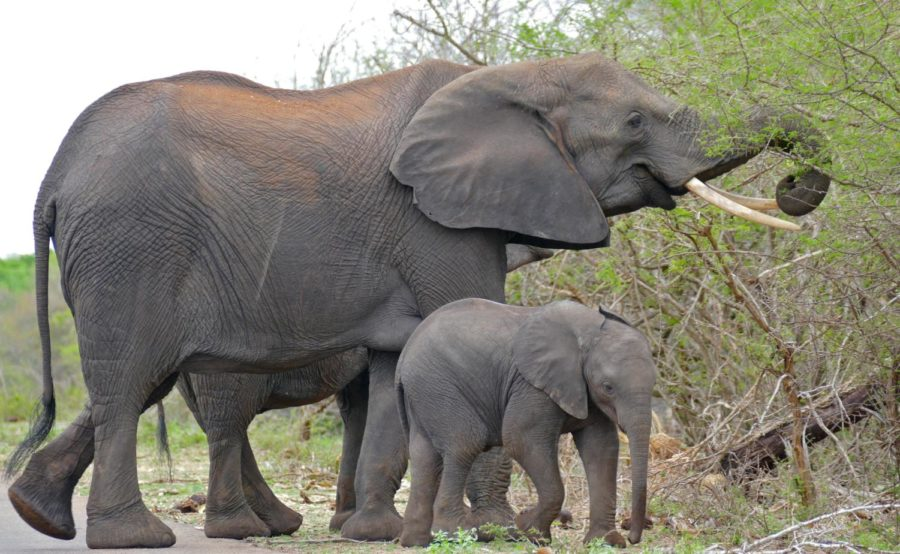 Learning+about+elephants