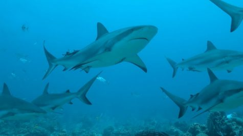 Half a million sharks could be killed for a Covid-19 vaccine